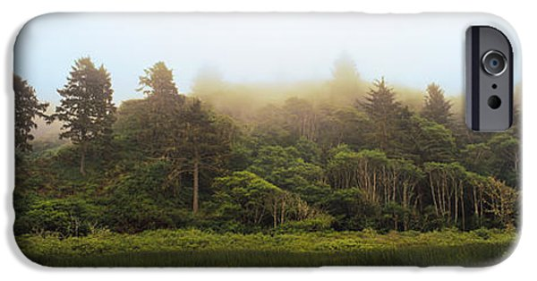 Morning iPhone Cases - Fog Over Trees, Redwood National Park iPhone Case by Panoramic Images
