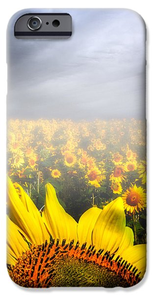 Foggy Field of Sunflowers iPhone Case by Bob Orsillo