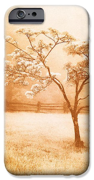Foggy Spring in the Blue Ridge Mountains iPhone Case by Dan Carmichael
