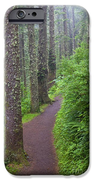 Lichens iPhone Cases - Foggy Trail iPhone Case by Mike  Dawson
