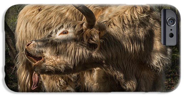 Beef iPhone Cases - Folded iPhone Case by Chris Fletcher