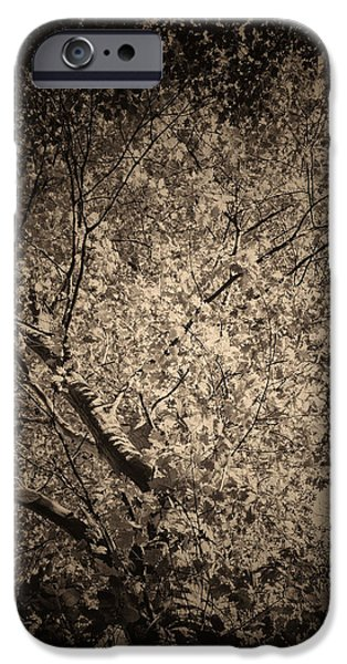 Foliage iPhone Cases - Foliage iPhone Case by Wim Lanclus