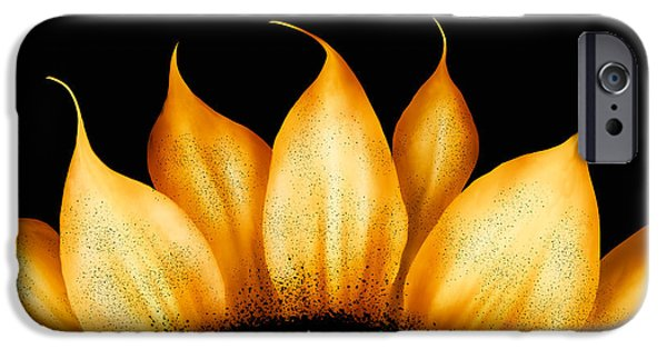 Brenda Bryant iPhone Cases - Folk Art Sunflower iPhone Case by Brenda Bryant