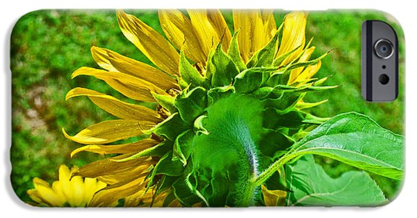 Consumerproduct iPhone Cases - Sunflower Following the Sun iPhone Case by George D Gordon III