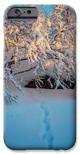 Lapland iPhone Cases - Foot Prints And Trees In The Frozen iPhone Case by Panoramic Images