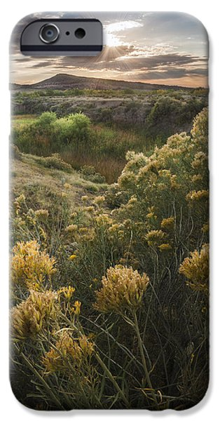 Fort Collins Photographs iPhone Cases - Foothills Sage iPhone Case by Michael Van Beber