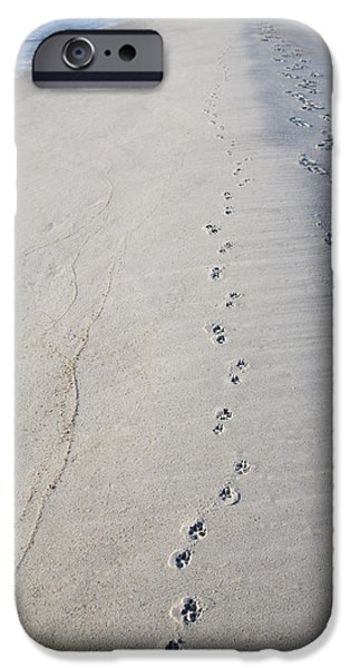 Footprints and Pawprints iPhone Case by Diane Macdonald