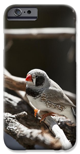Finch iPhone Cases - For a Moment-Alone iPhone Case by Douglas Barnard