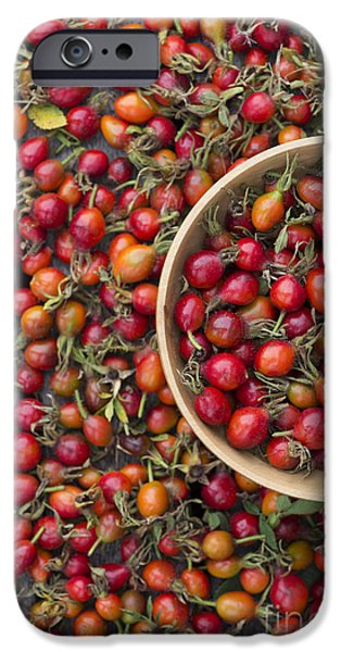 Wooden Bowl iPhone Cases - Foraged Rose Hips iPhone Case by Tim Gainey