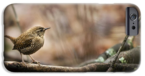 Wren iPhone Cases - Forest Birds Winter Wren iPhone Case by Christina Rollo