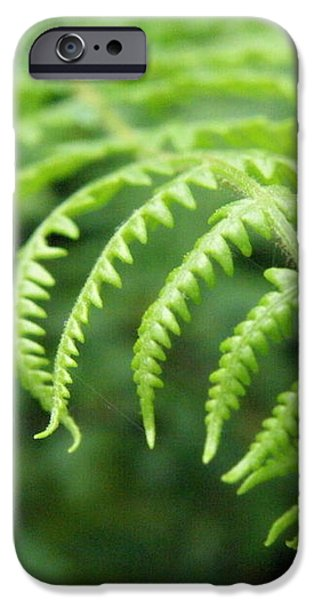 Forest Fern iPhone Case by Lainie Wrightson