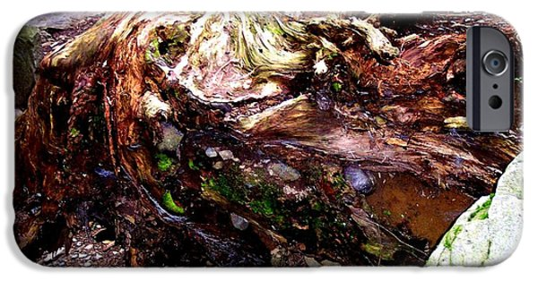 Tree Roots iPhone Cases - Forest floor iPhone Case by Janine Riley