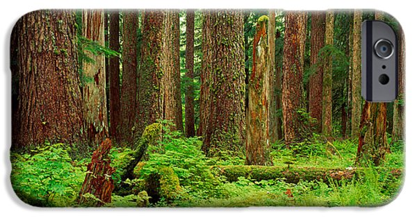 Forest Floor iPhone Cases - Forest Floor Olympic National Park Wa iPhone Case by Panoramic Images