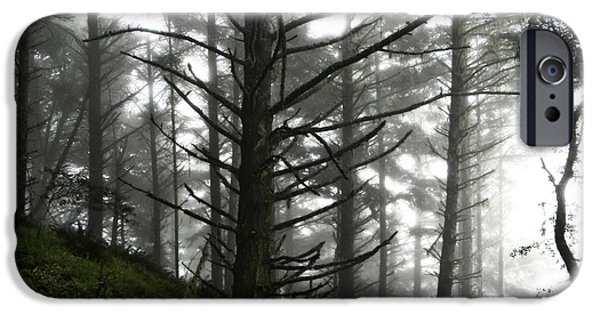 San Francisco iPhone Cases - Forest Fog iPhone Case by Lisa McKinney