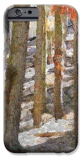 Forest for the Trees iPhone Case by Jeff Kolker