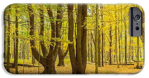 States iPhone Cases - Forest In Autumn, Letchworth State iPhone Case by Panoramic Images