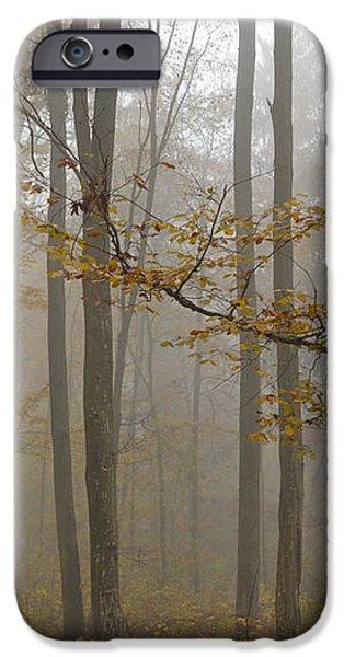 Forest in autumn iPhone Case by Matthias Hauser