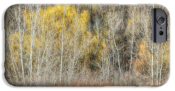 Forest iPhone Cases - Forest in late fall at Scarborough Bluffs iPhone Case by Elena Elisseeva