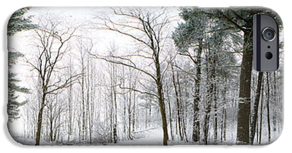 Winter Scene iPhone Cases - Forest In Winter, Quebec, Canada iPhone Case by Panoramic Images
