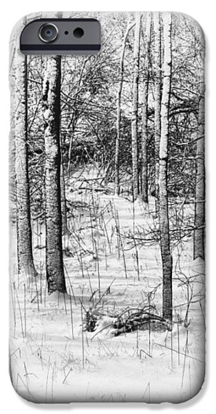 Snow Scene iPhone Cases - Forest in Winter iPhone Case by Tom Mc Nemar