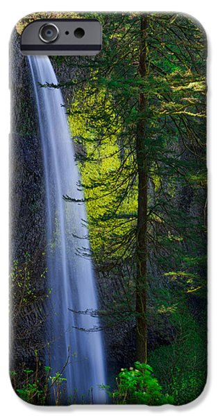 Pine Tree iPhone Cases - Forest Mist iPhone Case by Chad Dutson