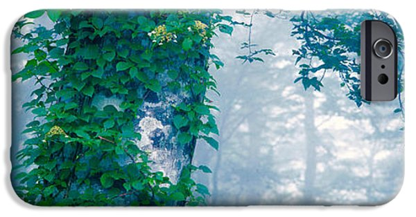 Green Foliage iPhone Cases - Forest Nagano Kijimadaira-mura Japan iPhone Case by Panoramic Images