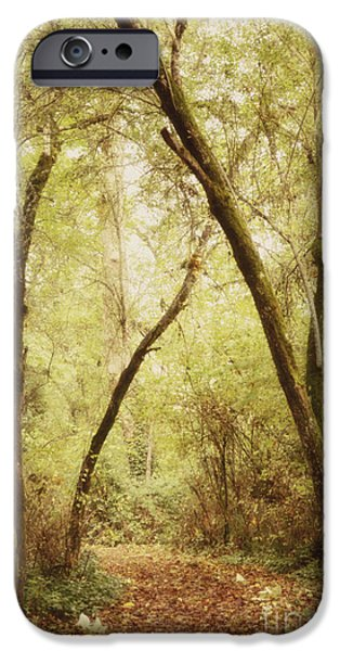 Forest iPhone Cases - Forest Path 1 iPhone Case by Rebecca Cozart