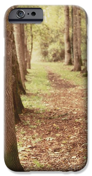 Forest iPhone Cases - Forest Path 2 iPhone Case by Rebecca Cozart