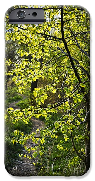 Forest iPhone Cases - Forest path iPhone Case by Elena Elisseeva