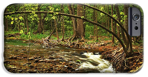 Creek iPhone Cases - Forest river iPhone Case by Elena Elisseeva