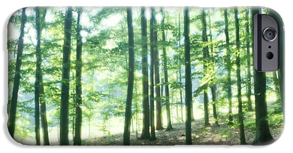 Mist iPhone Cases - Forest Scene With Fog, Odenwald iPhone Case by Panoramic Images