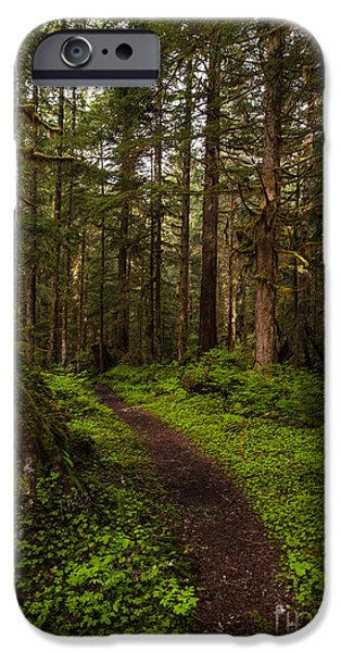 Water Flowing iPhone Cases - Forest Serenity Path iPhone Case by Mike Reid