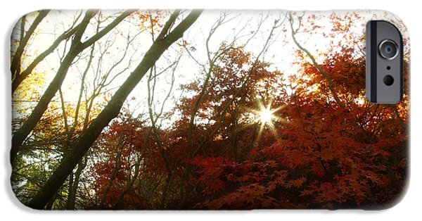 Beautiful Autumn Day iPhone Cases - Forest sunlight iPhone Case by Les Cunliffe