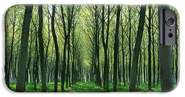 Green Path iPhone Cases - Forest Trail Chateau-thierry France iPhone Case by Panoramic Images