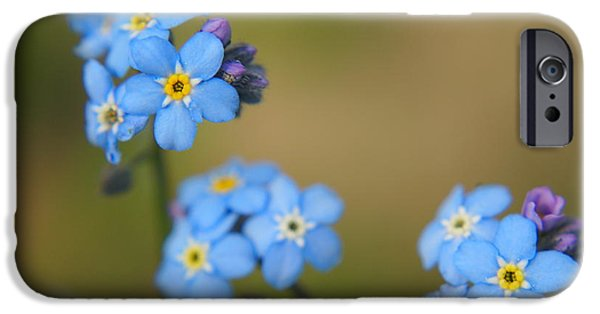 Aimelle Photographs iPhone Cases - Forget Me Not 01 - s01r iPhone Case by Variance Collections