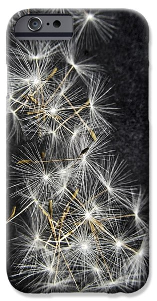 Weed Line iPhone Cases - Forgotten Wishes iPhone Case by Marianna Mills