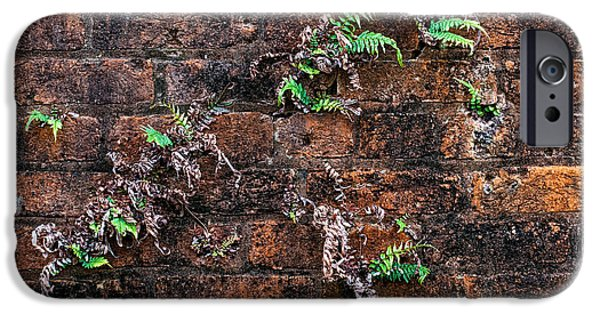 Architecture iPhone Cases - Fort Macomb ferns iPhone Case by Andy Crawford