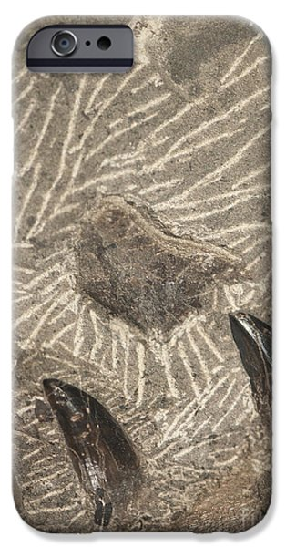 Fossil Shark Teeth iPhone Case by Artist and Photographer Laura Wrede