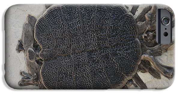 Fossil iPhone Cases - Fossil Soft-shelled Turtle iPhone Case by John Cancalosi/Okapia
