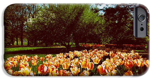 Indiana Springs iPhone Cases - Foster Park Tulips iPhone Case by Mountain Dreams