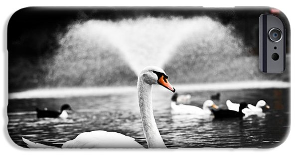 Swans... iPhone Cases - Fountain Swan iPhone Case by Shane Holsclaw