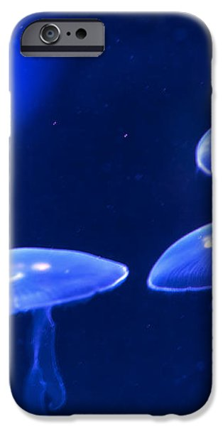 Four Blue Moon Jellyfish iPhone Case by Artist and Photographer Laura Wrede