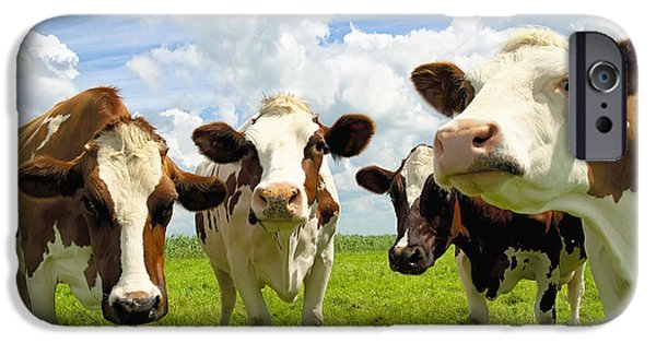 Recently Sold -  - Field. Cloud iPhone Cases - Four chatting cows iPhone Case by Jan Brons