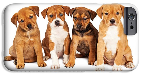 Litter Mates iPhone Cases - Four Cute Puppies Together iPhone Case by Susan  Schmitz