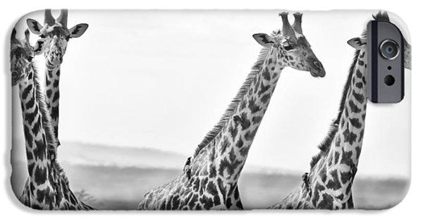 Kenya Photographs iPhone Cases - Four Giraffes iPhone Case by Adam Romanowicz
