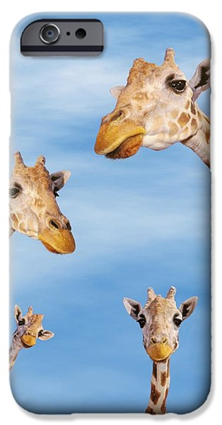 Four Animal Faces iPhone Cases - Four Giraffes iPhone Case by Thomas Kitchin Victoria Hurst