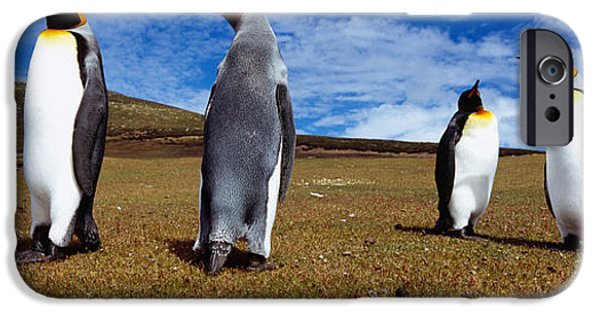 Sea Birds iPhone Cases - Four King Penguins Standing iPhone Case by Panoramic Images