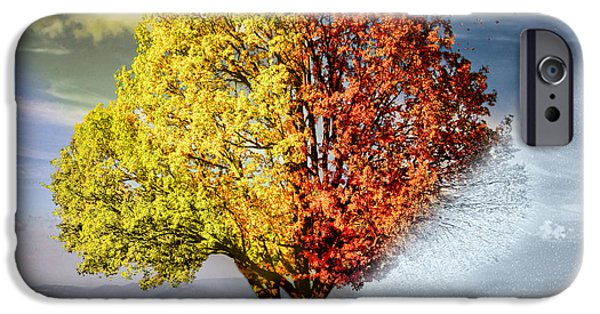 Wintertime iPhone Cases - Four Seasons Tree iPhone Case by Gosia K