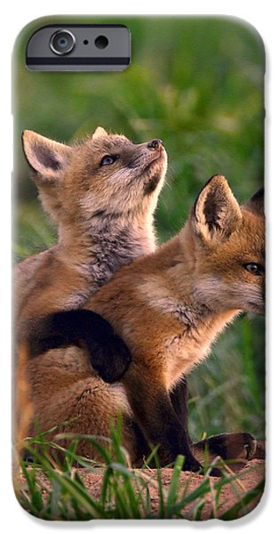 Red Fox iPhone Cases - Fox Cub Buddies iPhone Case by William Jobes