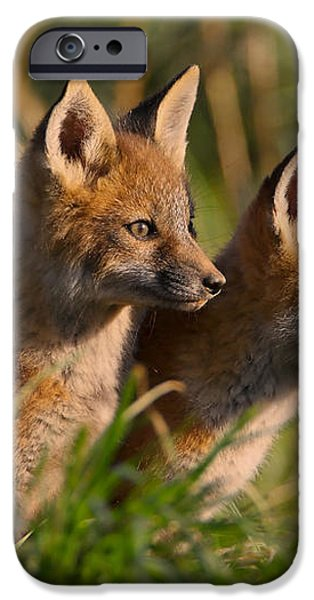 Fox Cubs at Sunrise iPhone Case by William Jobes